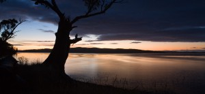 sunrise-lake-tree-8828
